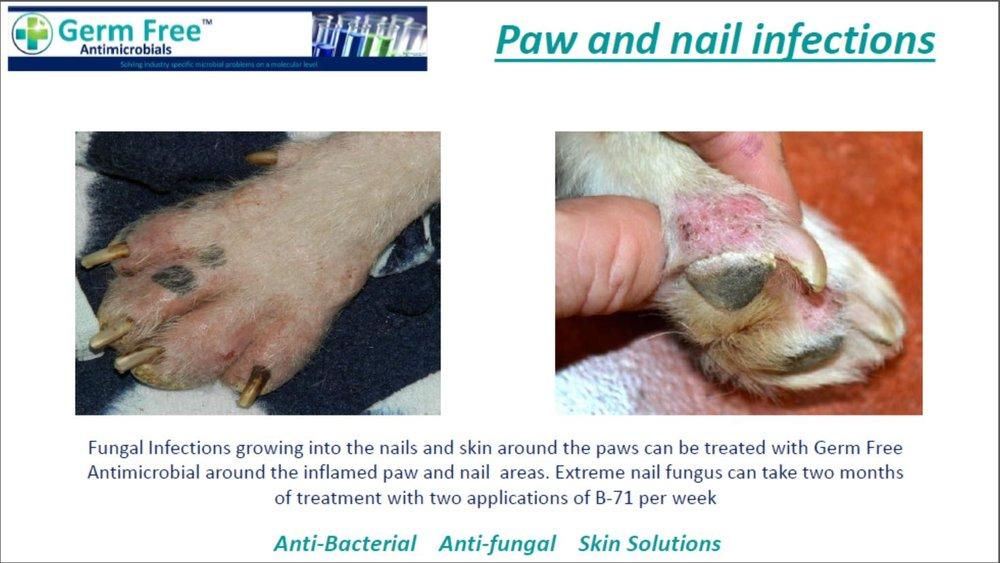 GF- Pet Care 6.JPG