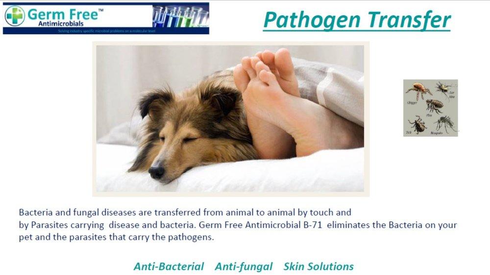 GF- Pet Care 7.JPG