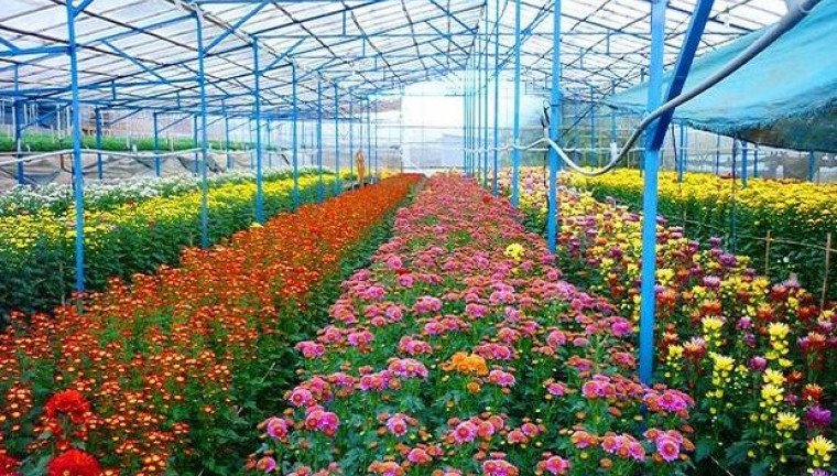 langbiang-flower-vegetable-farm-dalat-guide-review-attractions-maps-address-2-760x432.jpg