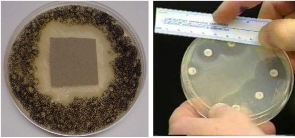 Zone of Inhibition in - Agar Diffusion Tests
