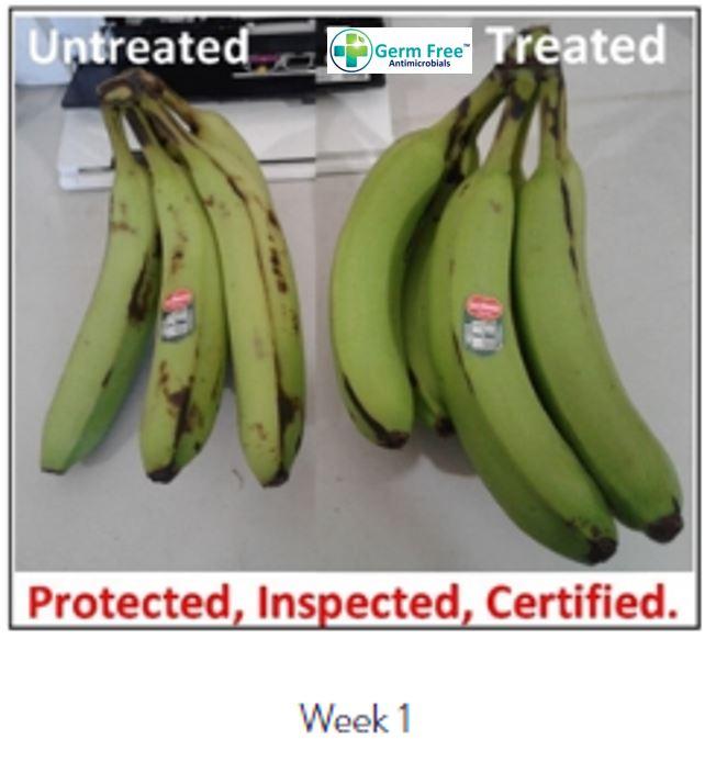 Banana Week 1.JPG
