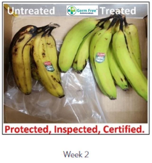 Banana Week 2.JPG