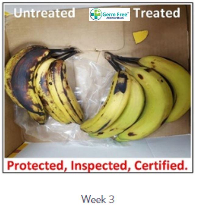 Banana Week 3.JPG