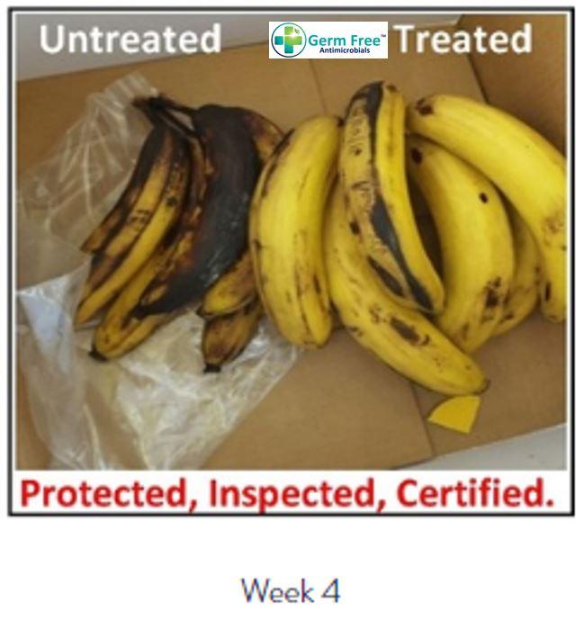 Banana Week 4.JPG