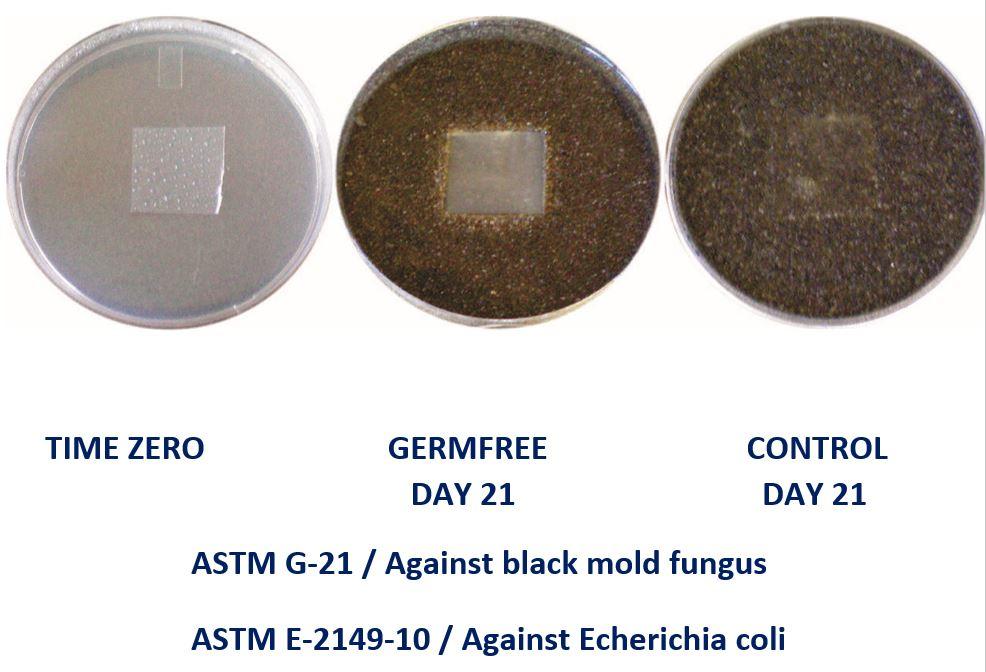 GF-21 Day Bacteria.JPG
