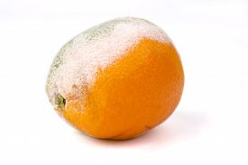 mouldy-orange-white-background-rotten-fruit_cg1p65282533c_th.jpg