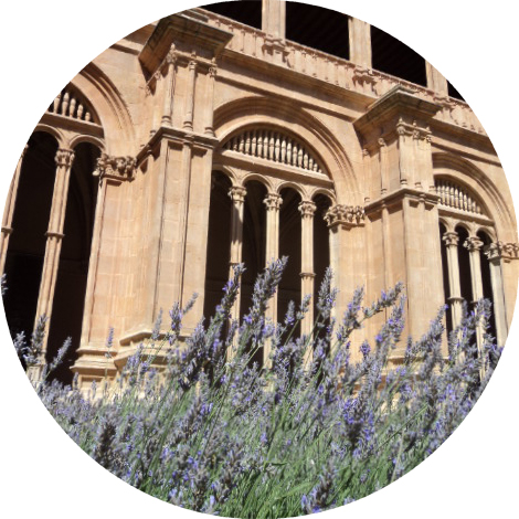 - Though I cannot for the life of me remember which cloister in Salamanca this lavender was growing in, this image is probably the most potent one I carried away with me from Spain.