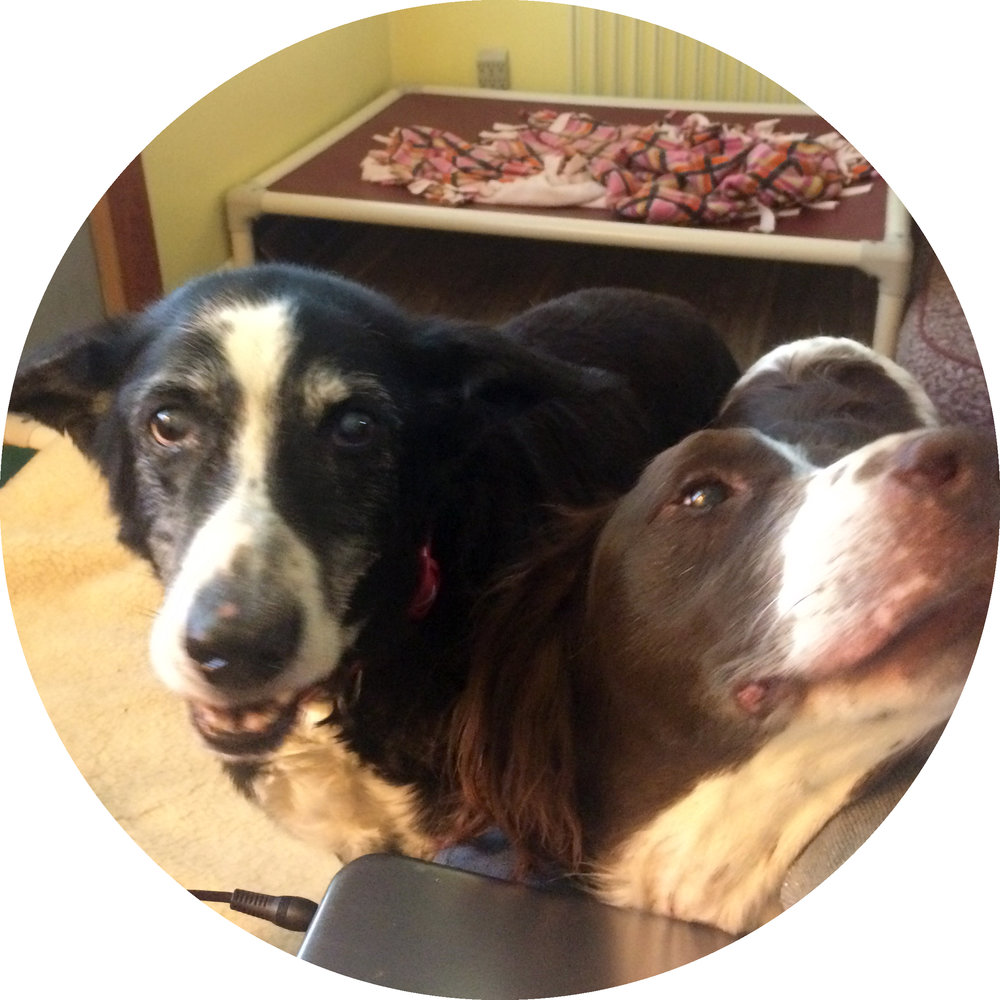 - First, a picture of elderly gentlefolk to soften the blow. Jake is the border collie and Buddy is the springer spaniel. Buddy is no longer with us, but he was my dedicated companion through the eight months I spent this year petsitting at the old dog sanctuary.