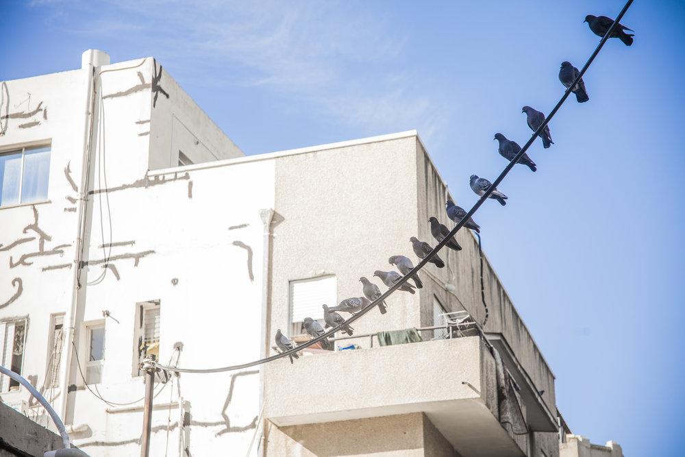 Birds in da hood