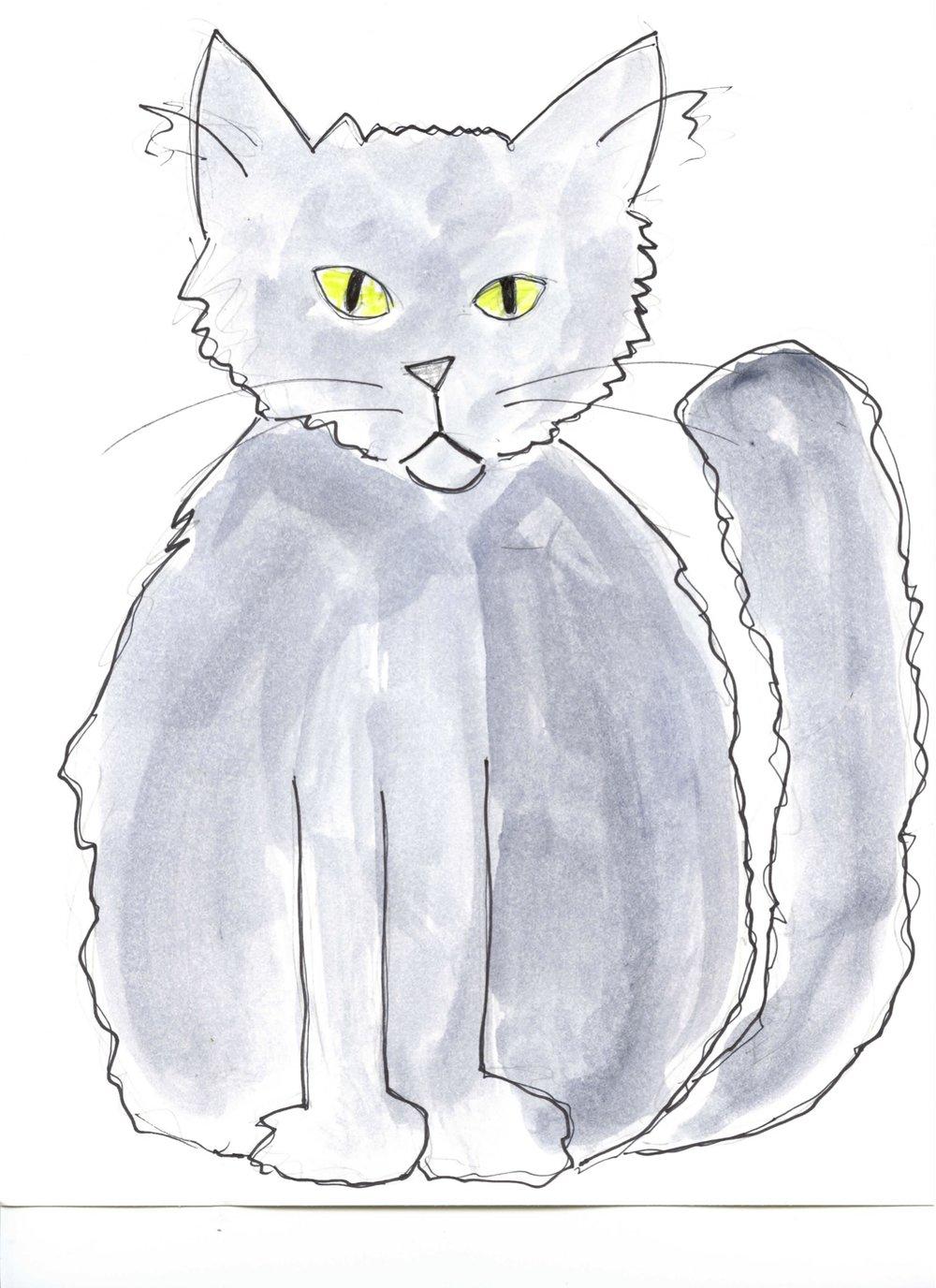 Lost Cat on Vashon Hwy tf.jpg