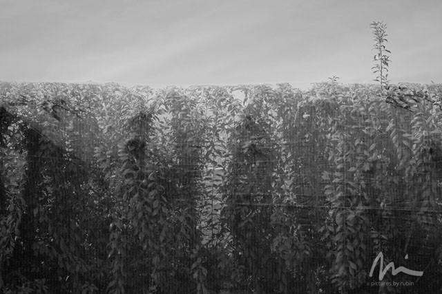 Farm, Outside Modesto, 2015, by MH Rubin