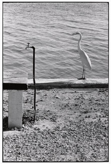 Elliott Erwitt, Florida Keys (1968)