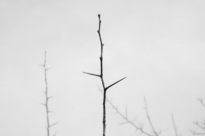 Thorn, Santa Cruz (2016)