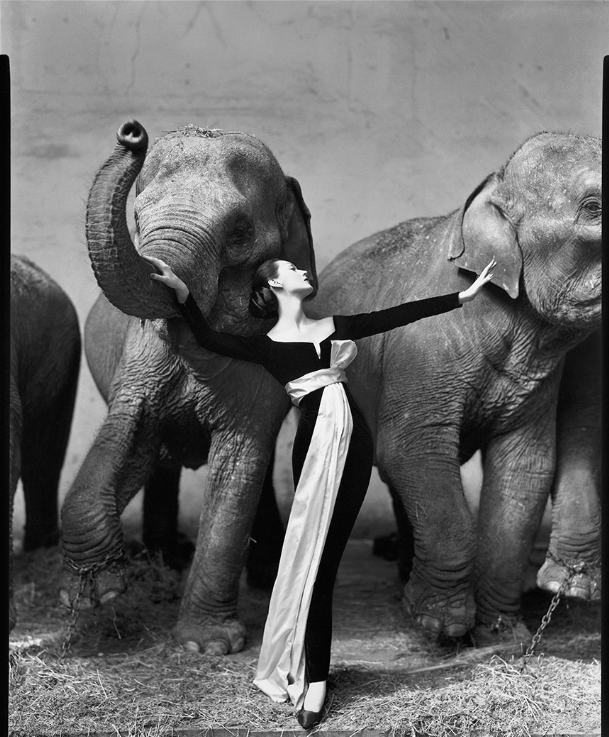 "Richard Avedon, ""Dovima with Elephants"" (1955) (Evening dress by Dior, Cirque d'Hiver, Paris, August 1955)"""