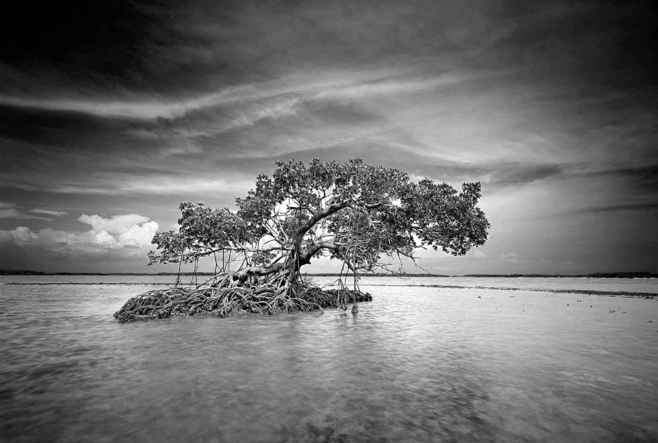 Clyde Butcher, INDIAN KEY 6 Everglades National Park, FL (1997)