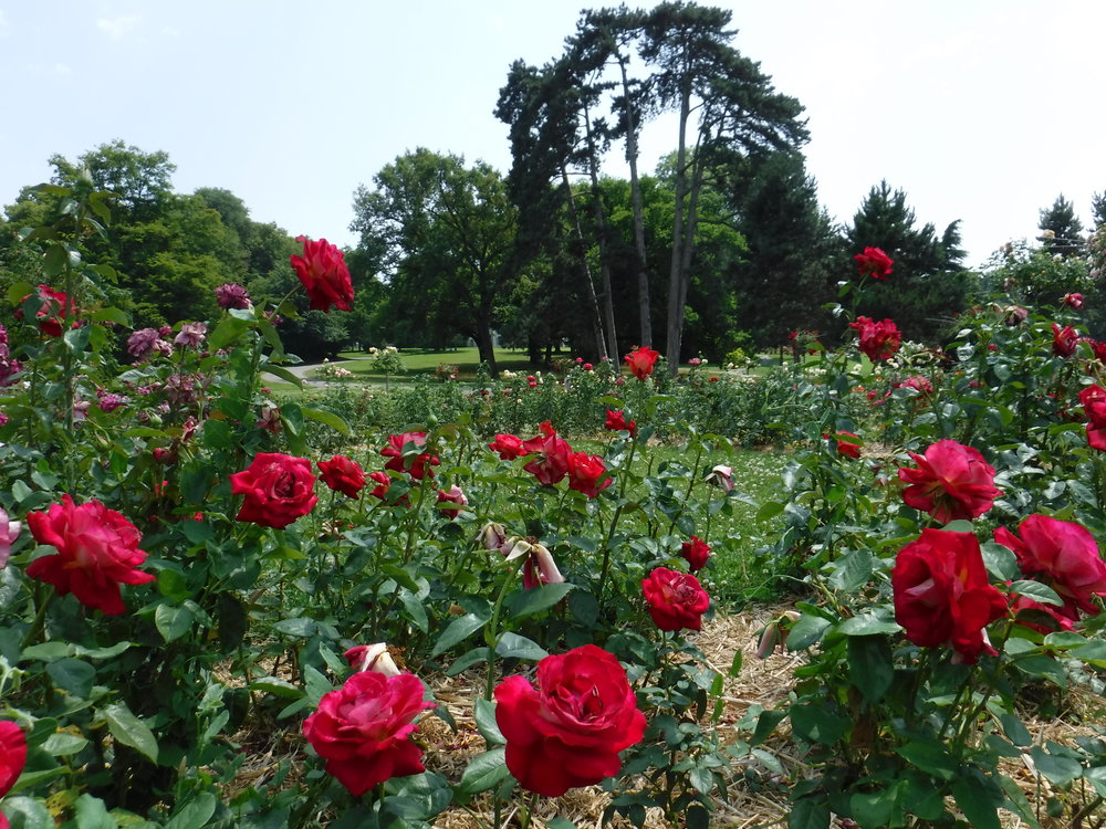 Switzerland_Geneva_RoseGarden2.JPG