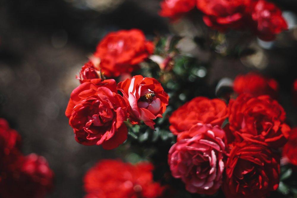 Rosaleda de Cervantes -
