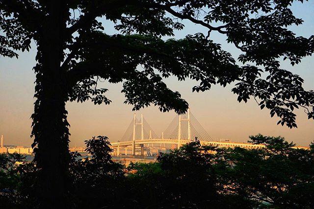 #Japan #yokohama #japantrip #minatogamieruokakouen #港が見える丘公園 #wagamamarestaurant