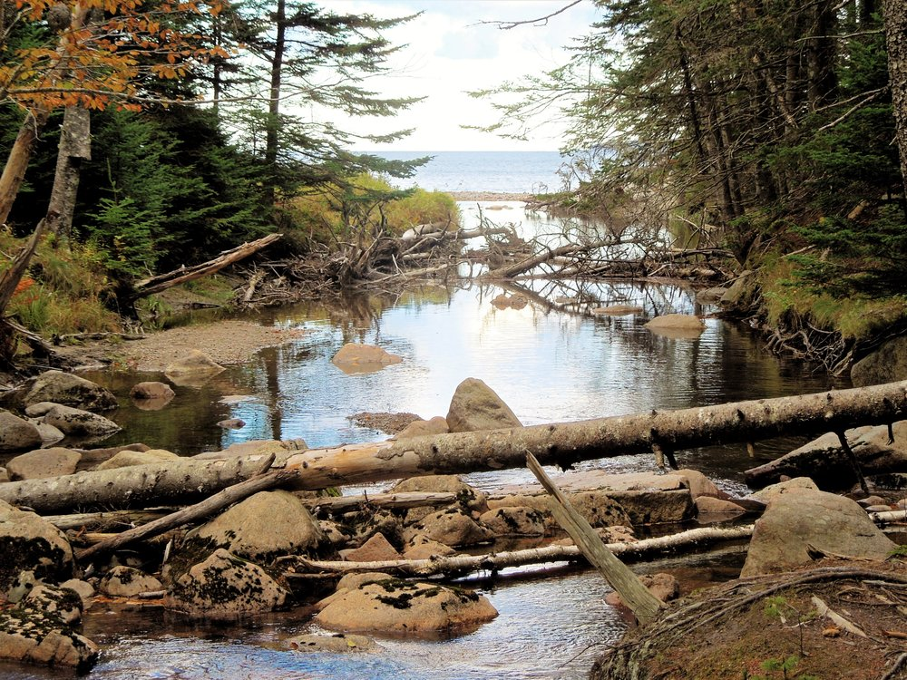 Acadia National Park where streams meet the ocean
