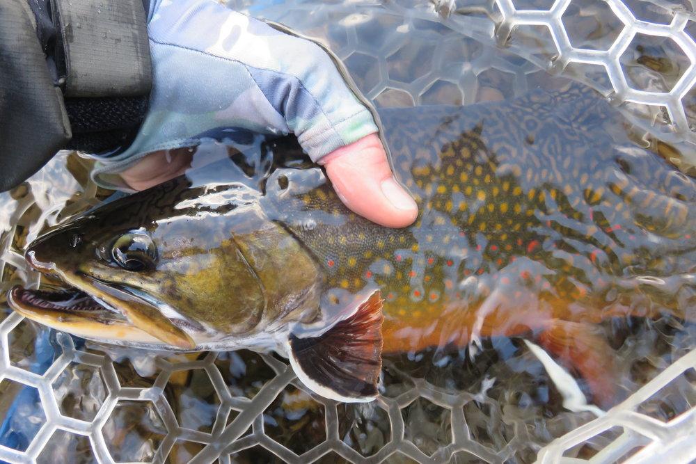 ME - Roach River (5).JPG
