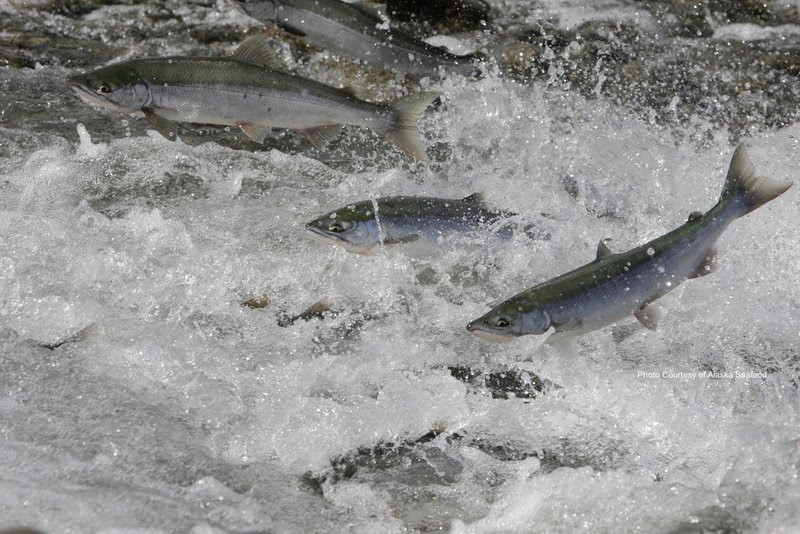 Downeast Salmon Federation