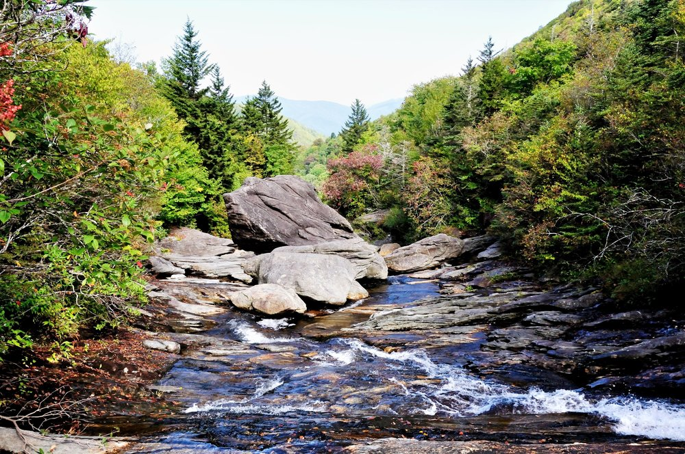 Native Brook Trout Stream in Pisgah National Forest, NC.JPG