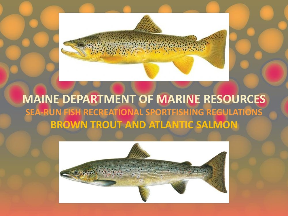 DMR-Sea-Run-Fish-Regulations-002.jpg