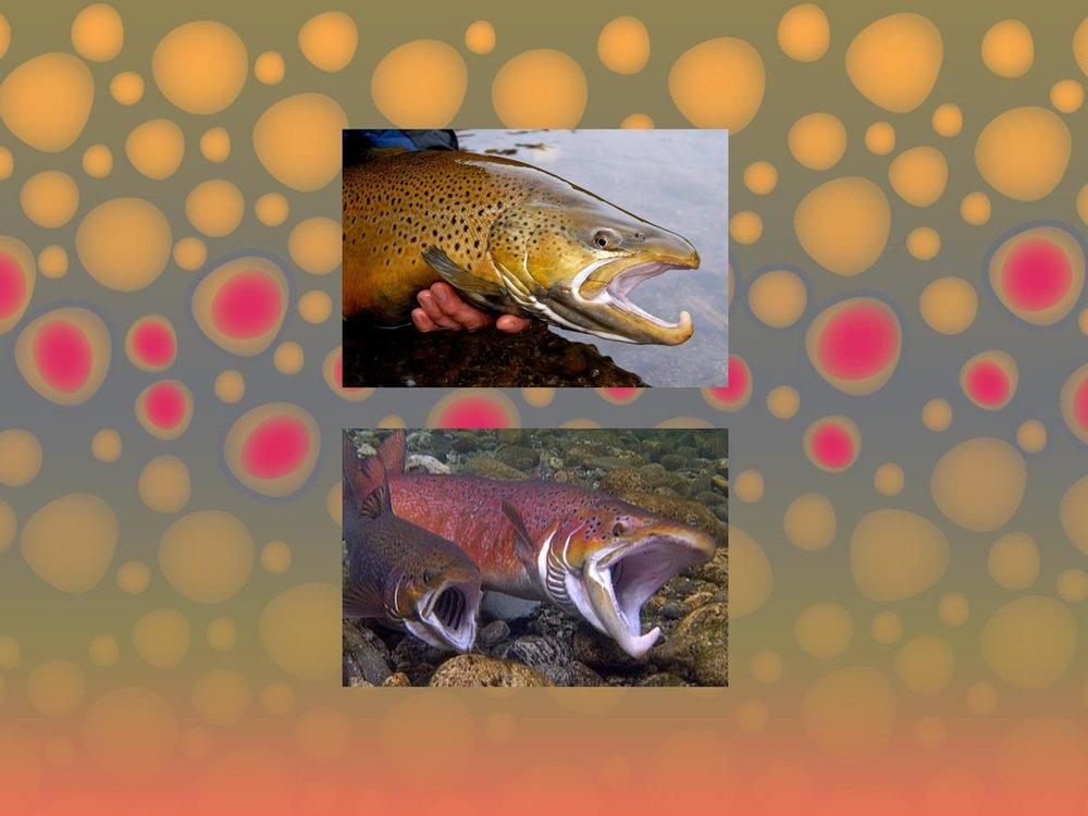 DMR-Sea-Run-Fish-Regulations-014.jpg