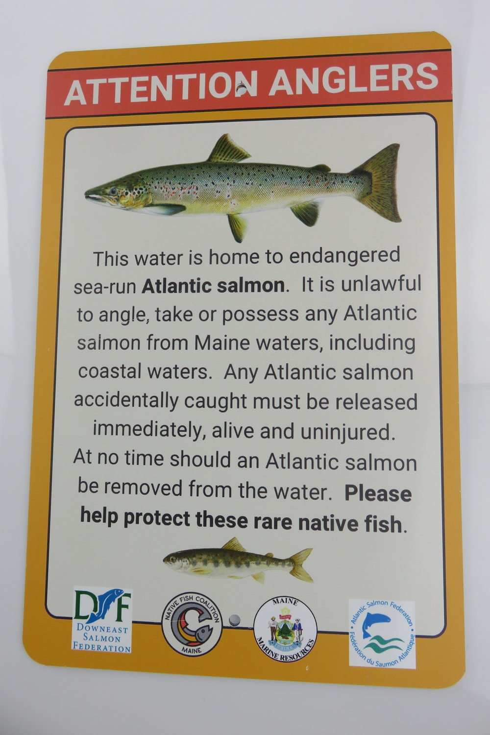 Atlantic Salmon Sign.JPG