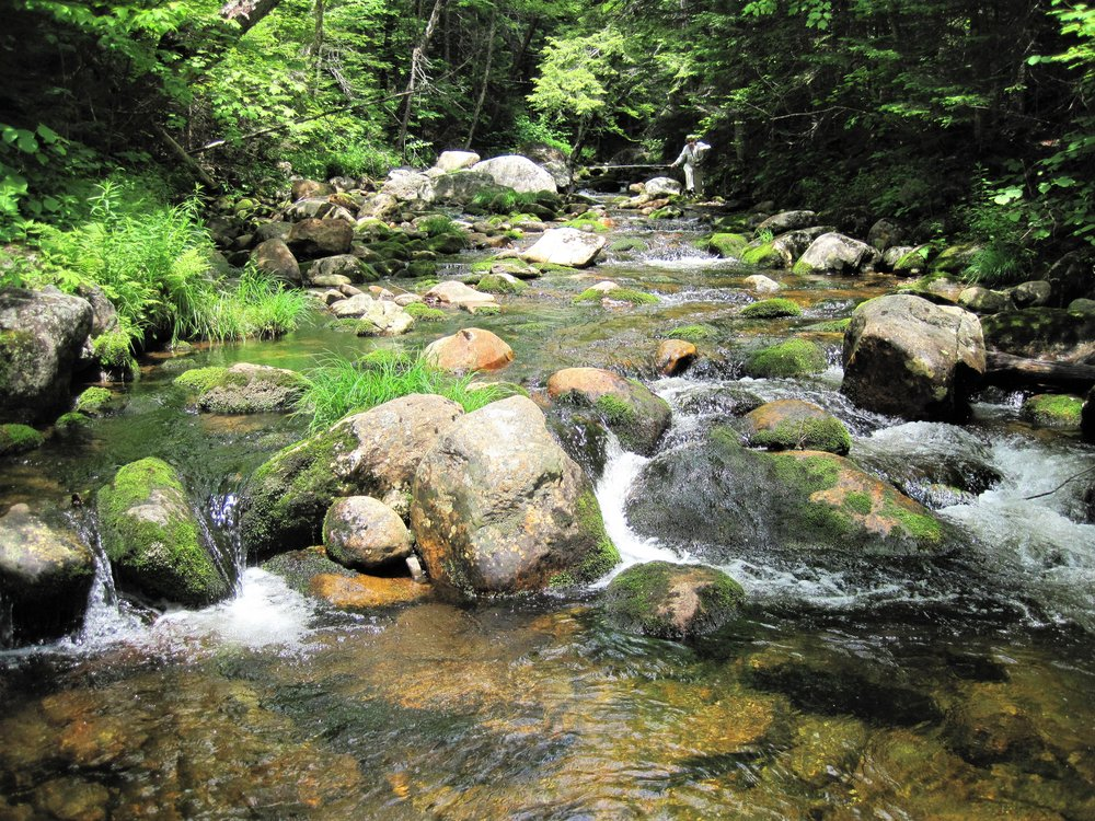The upper Wildcat River in New Hampshire, one of only two Wild & Scenic Rivers in the state.
