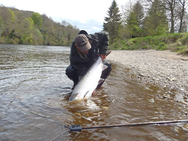 Salmon Fishing Scotland969434_451578988269297_723570581_n.jpg