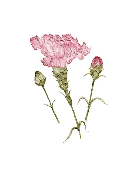 january carnation LR.jpg