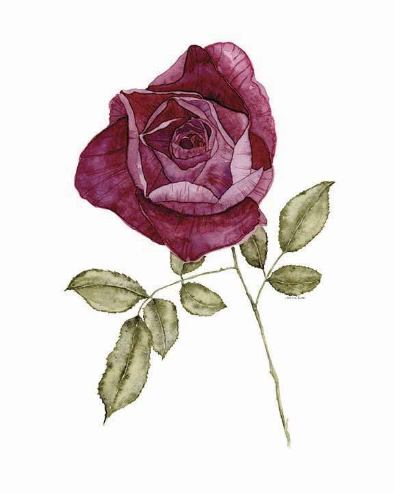rose LR.jpg