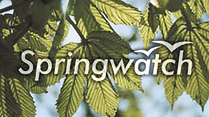 BBC-Springwatch.jpg