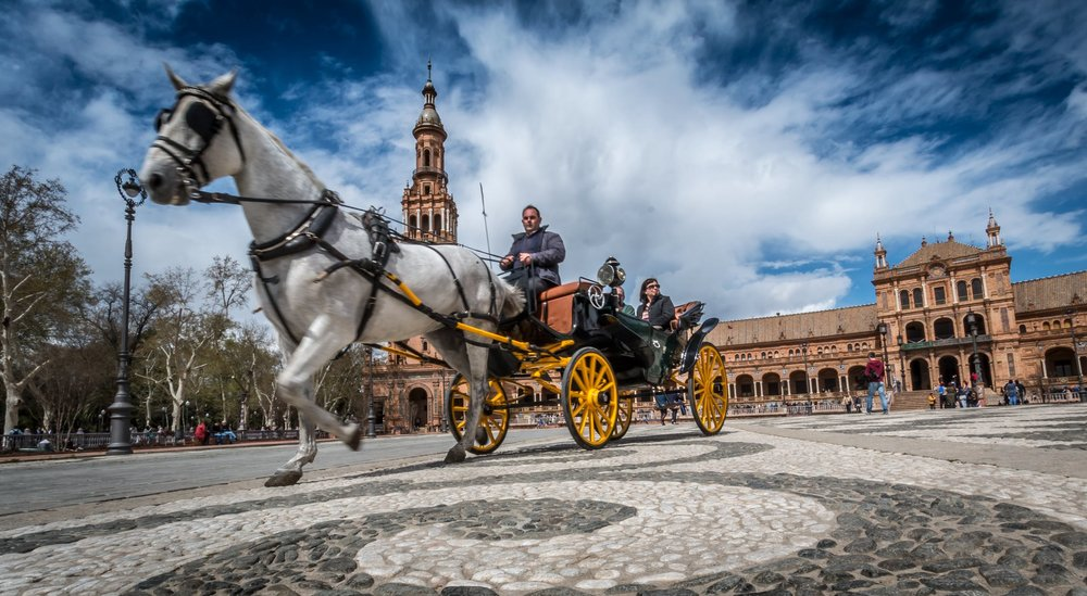 sevilla-horse-spain-tourism-162042.jpeg