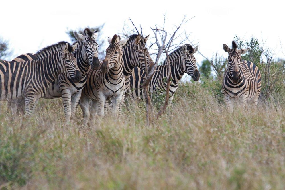 africa-animal-photography-animals-469780 (1).jpg