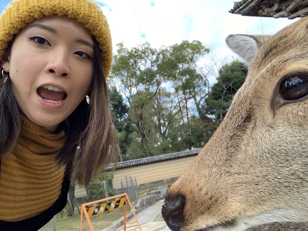 A little SELFIE with the Nara deer hahahaha