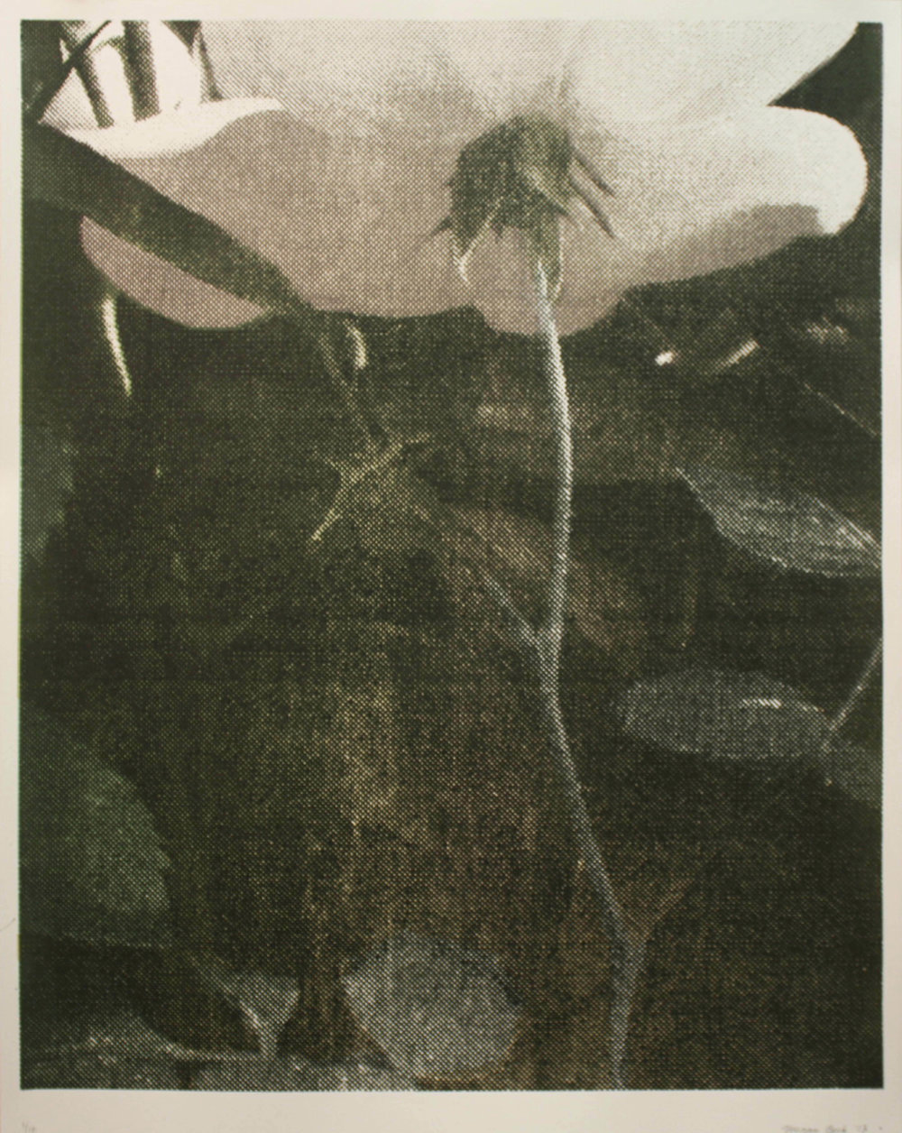Rose Garden #2, silkscreen, 2013