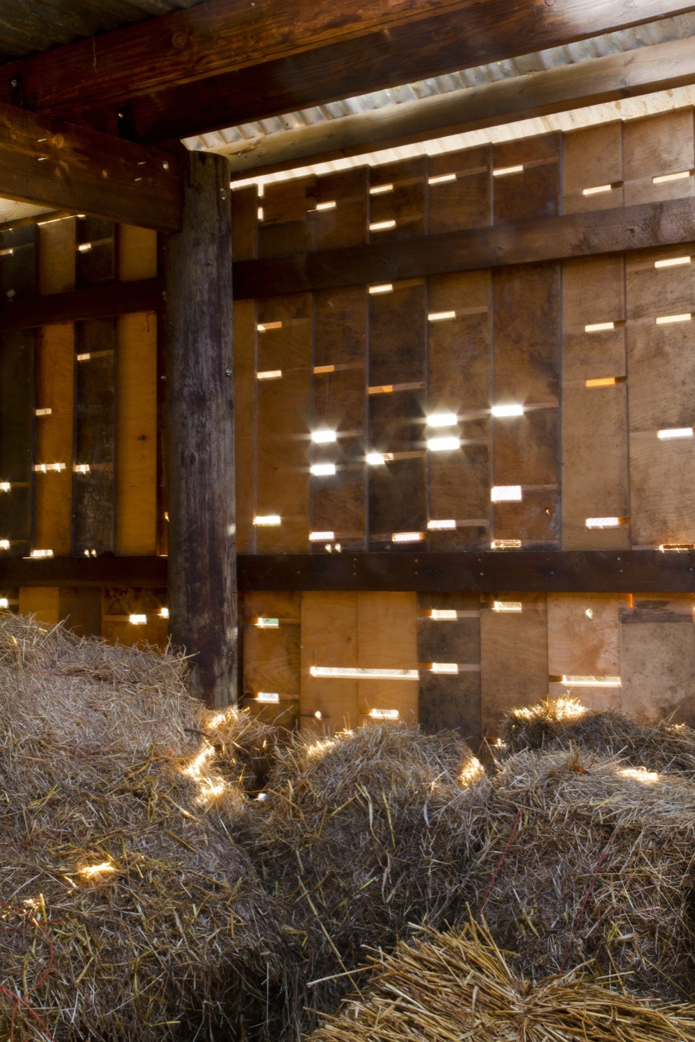Cowshed__design_and_build_workshops_led_by_Cowshed_Collective._Image_by_Ste_Murray_(5).jpg