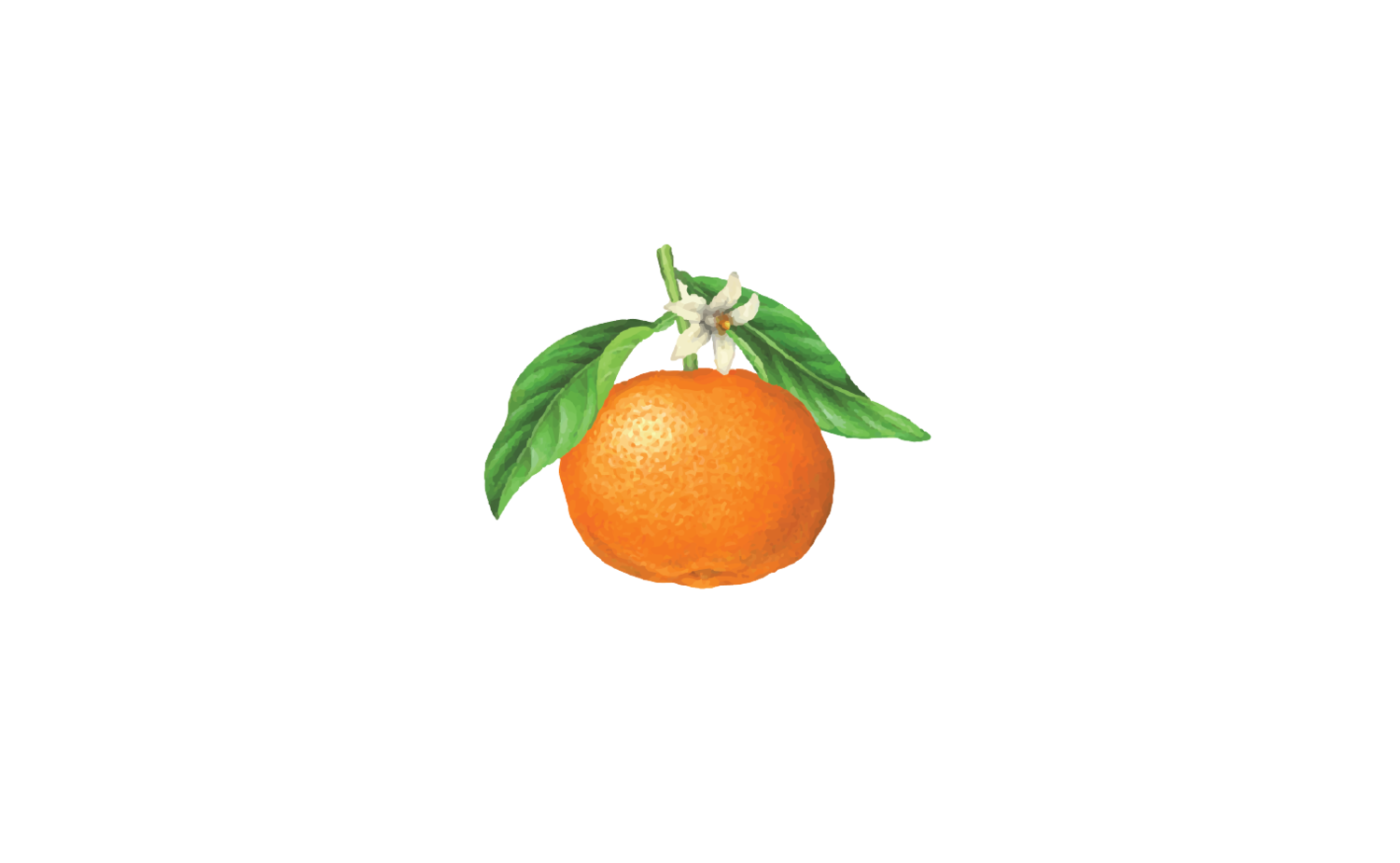 Orange Blossom Dollies