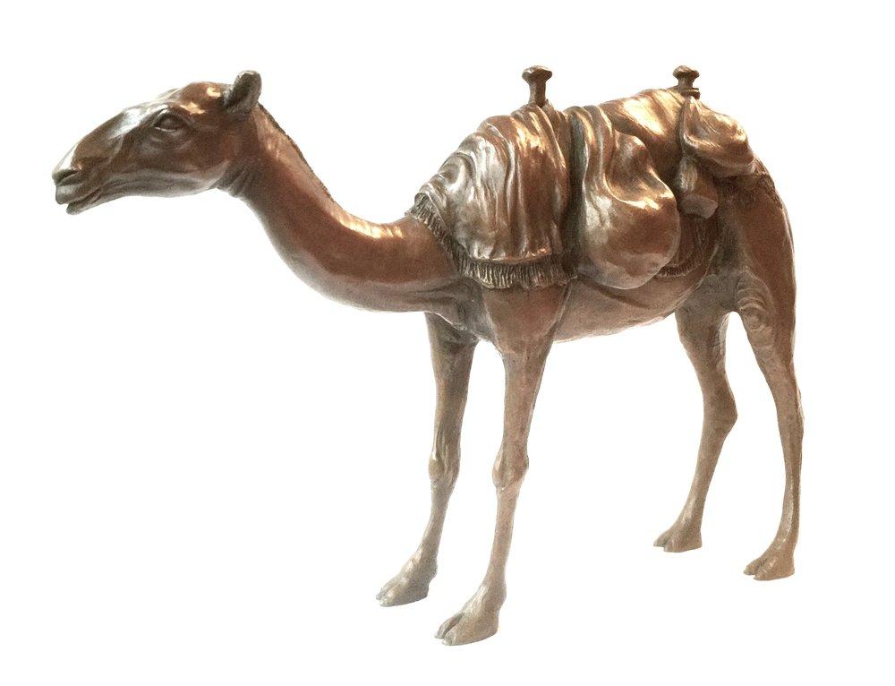 Arabian Camel 2.jpg