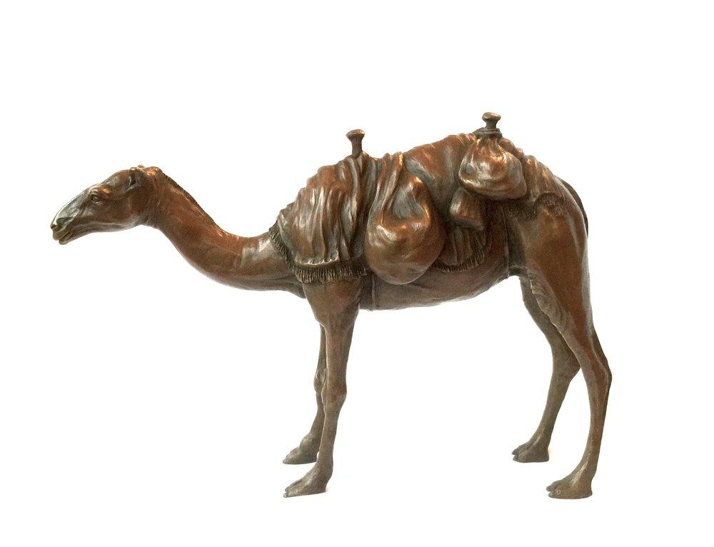Arabian Camel 3.jpg