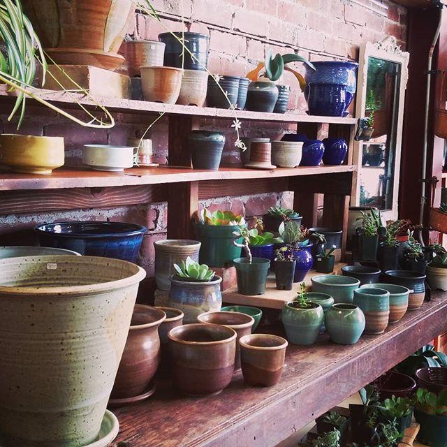 Planters and succulents.  #pottery #ceramics #sculpture #handmadepottery #planters #plants #succulents #cacti #potteryplanters #santacruzpottery #santacruzca #highway1ca