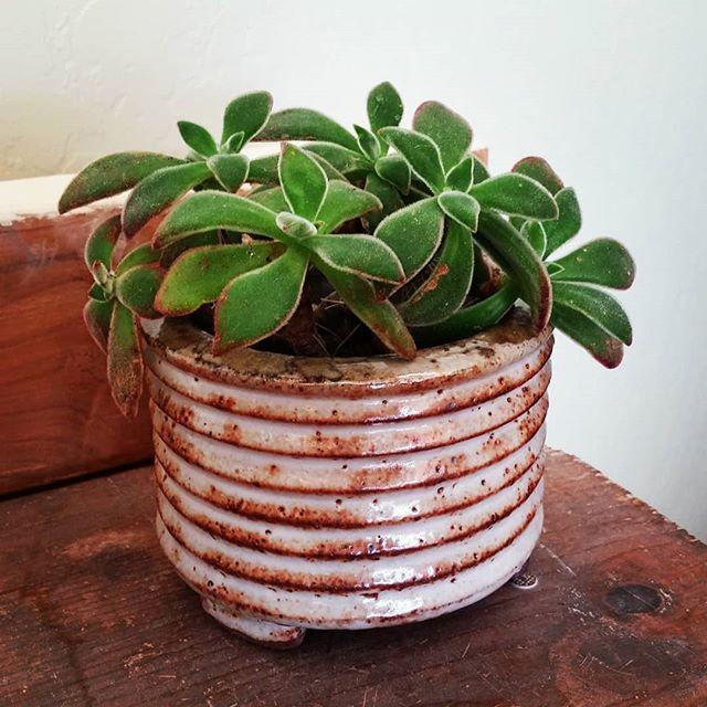 Saturday at the pottery shop.  #santacruzpottery #succulents #cacti #succulentplanters #succulentsaturday #pottery #ceramics #sculpture #handmadepottery