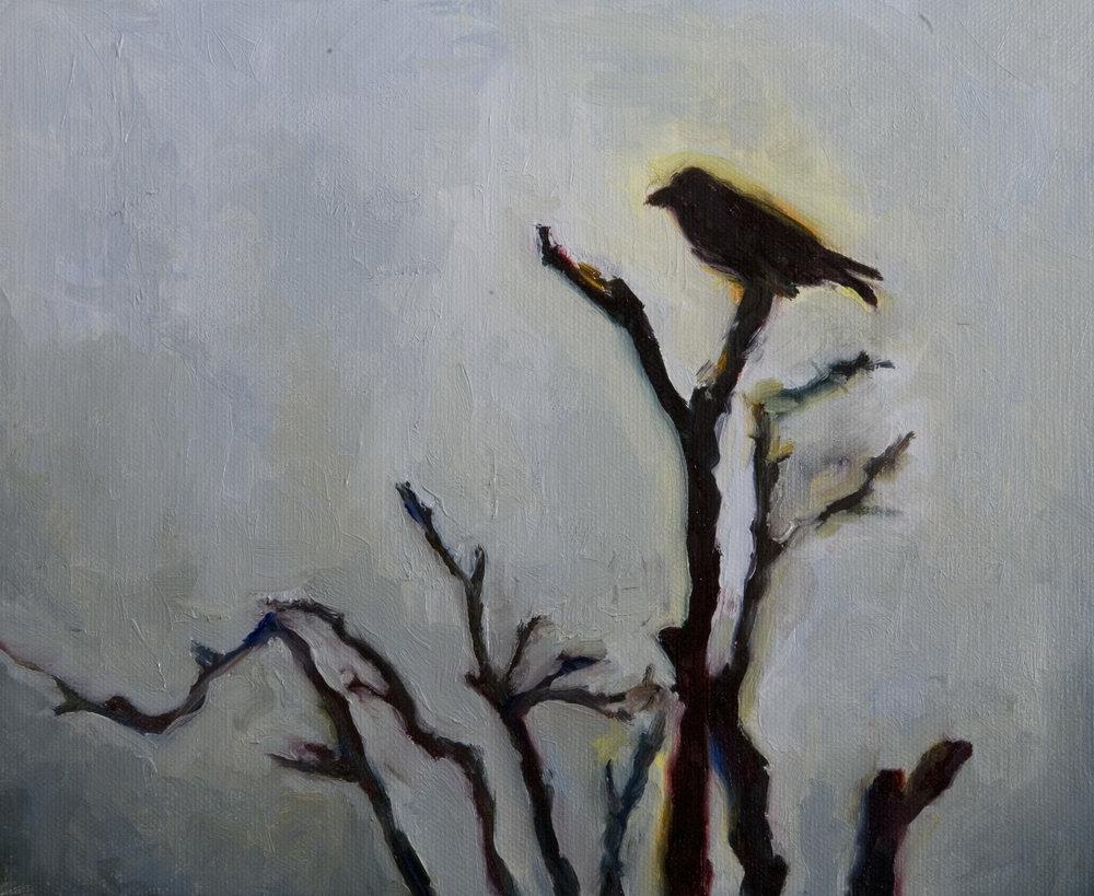 Blackbird Soliloquy