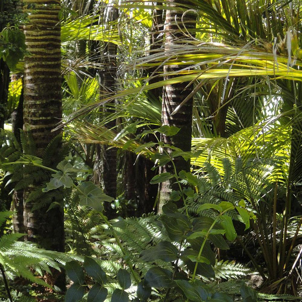 rainforest-78516_1280-2.jpg
