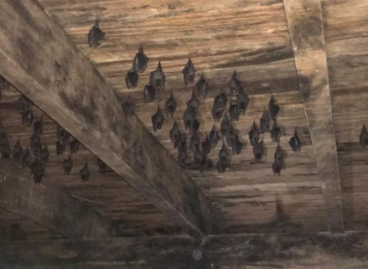 Bat colony.png