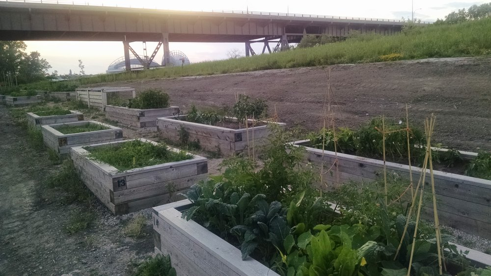 Community Gardens_Kay Howell (4).jpg