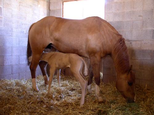 horse straw.jpg