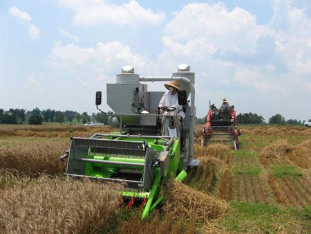 strawharvest.jpg
